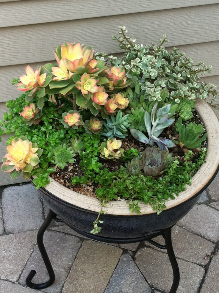 Succulent container creative garden ideas pinterest - How to make a succulent container garden ...