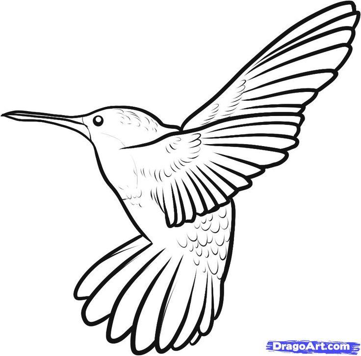Line Drawing Hummingbird : Pinterest