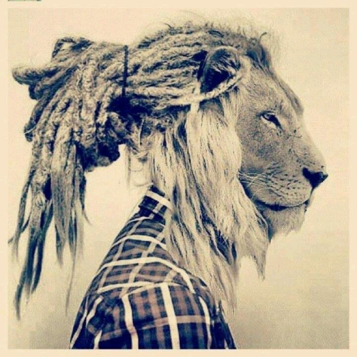 Rasta Lion With Dreads Rasta / hipster lion