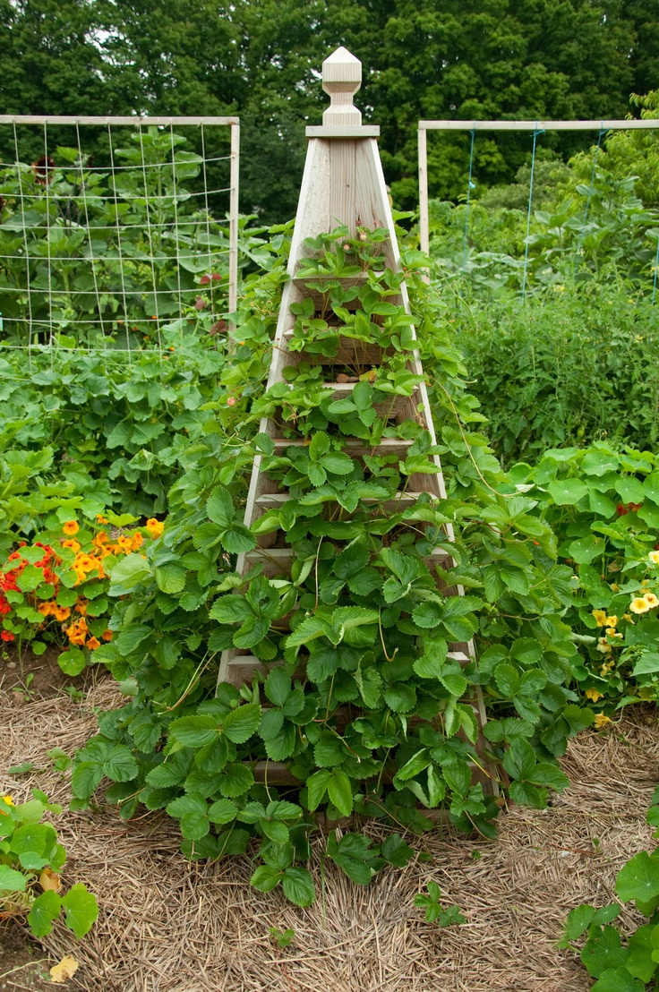 Strawberry trellis garden potager pinterest for Strawberry garden designs