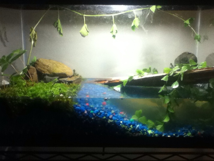 Pin by amanda baker on betta frog tank pinterest for Making a fish tank