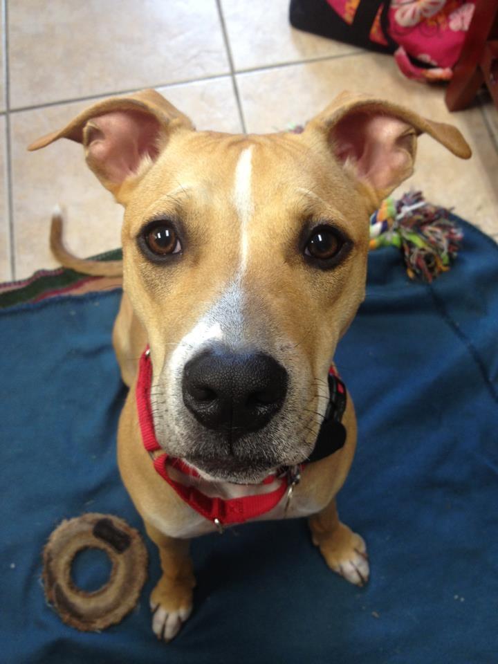... ://tamckay.com/ch/american-bulldog-boxer-mix-puppies-for-sale-in-ohio