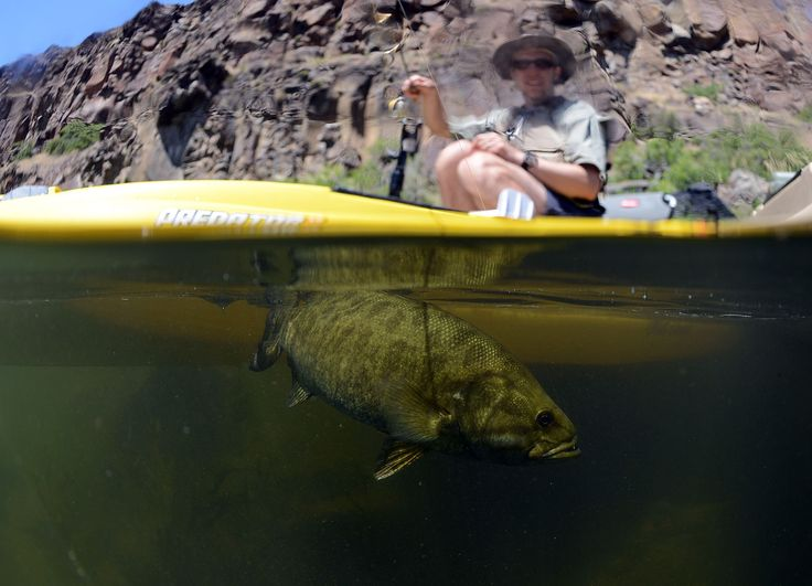 Bass fishing from a kayak life hacks pinterest for Kayak bass fishing
