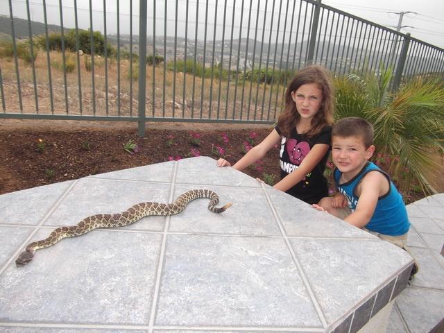 Image Result For Snake Fence