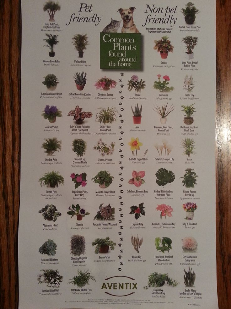 Pet friendly plants green thumb sort of pinterest for Easy houseplants safe for pets
