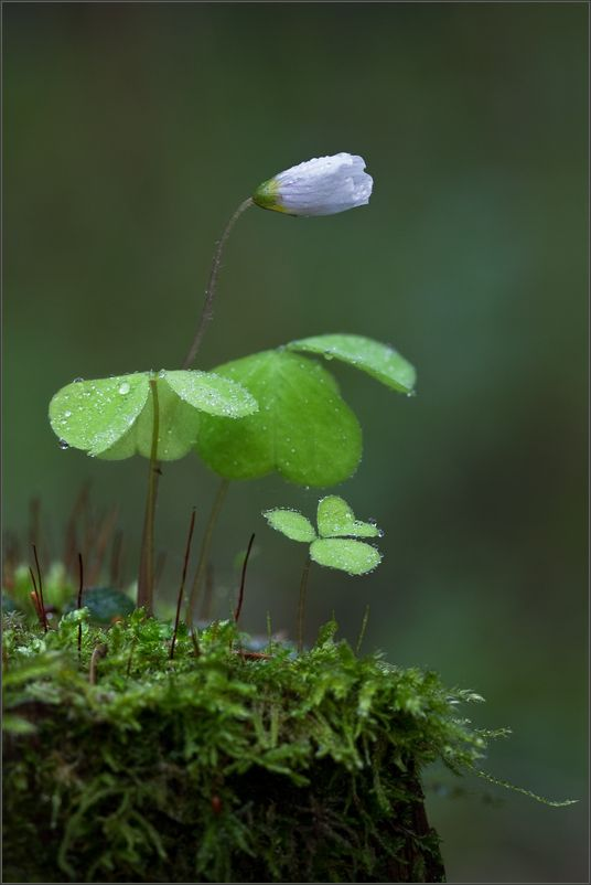 You actually have to click on the picture to see how delicate the dewdrops are...