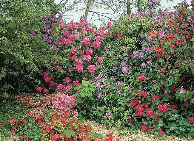 Les arbustes de printemps