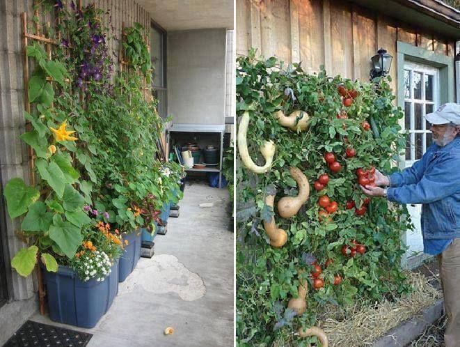 Vertical Gardening Idea Sr1 Garden Ideas Pinterest