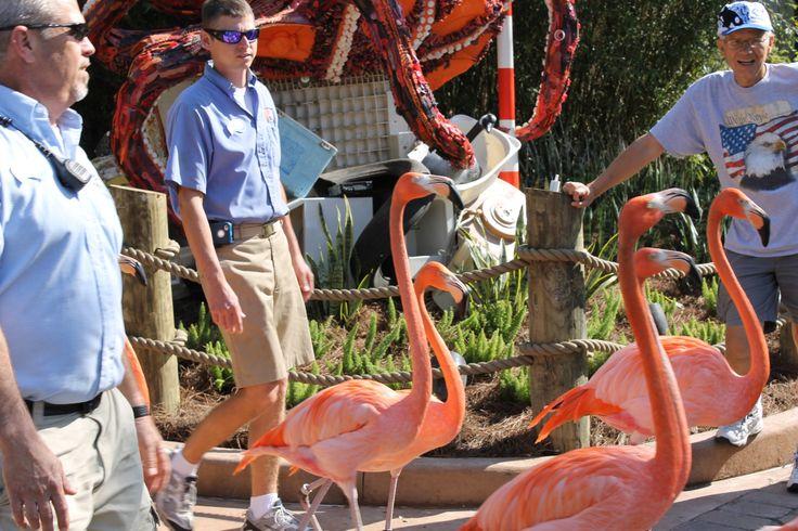 Flamingos at SeaWorld