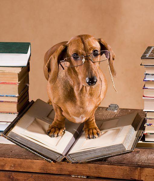 Studious Dog | Animals,...misc | Pinterest