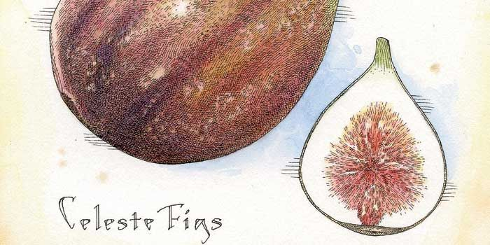 What's in Season: Figs (Garden & Gun)