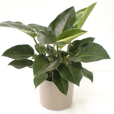 Low light house plants - House plants that grow in low light ...