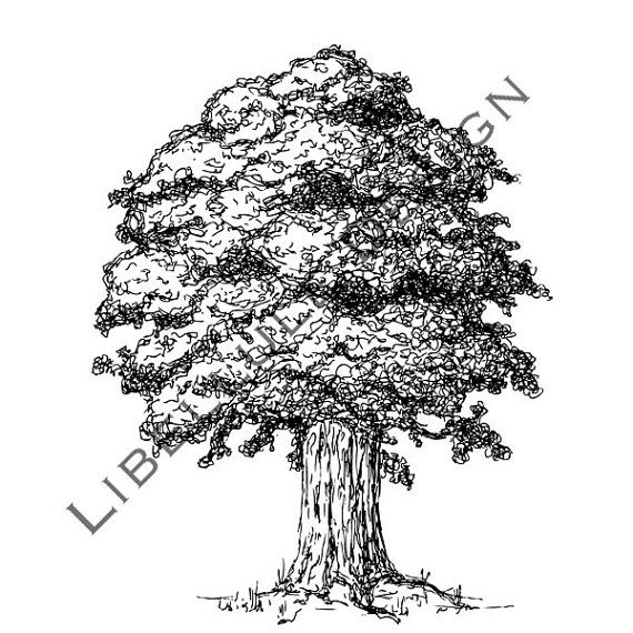 Oak Tree Vector and JPG digital images by libelluledesign on Etsy   5    Oak Tree Clip Art Black And White