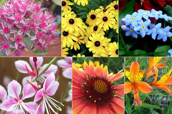 As melhores flores perenes para o seu jardim