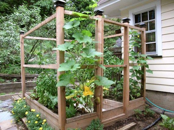 Enclosed Raised Vegetable Garden | For the Home | Pinterest