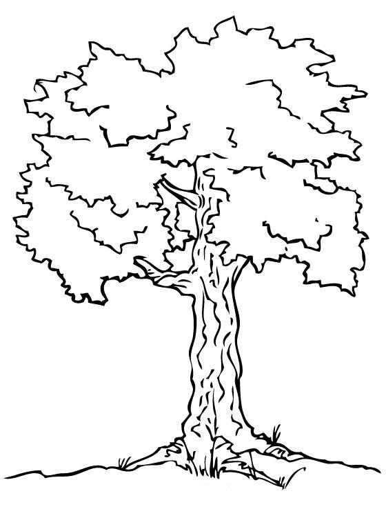 White Pine Tree Coloring Pages Coloring Pages