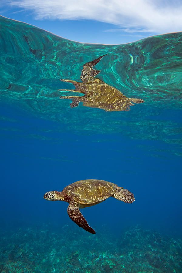 ✮ Turtle and Sky