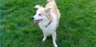 Boundary Training for Dogs | eHow.com