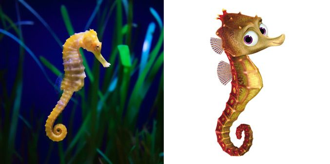 Real fish versus finding nemo fish for Finding nemo fish