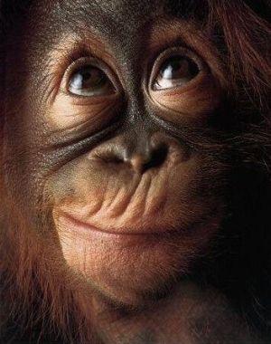 Majmuni - Page 2 495caa36e135e50c7abb0c47ab23ec38
