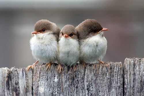 so cute..triplets