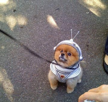 dog in space suit - photo #9