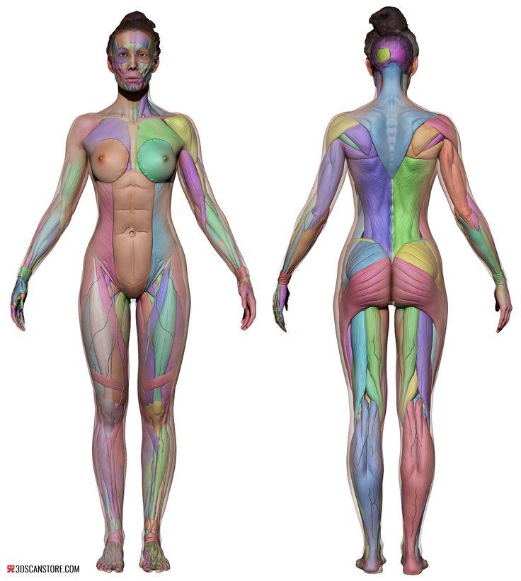Girls body anatomy
