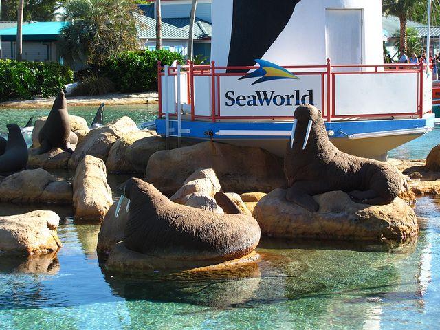 SeaWorld Orlando souvenirs