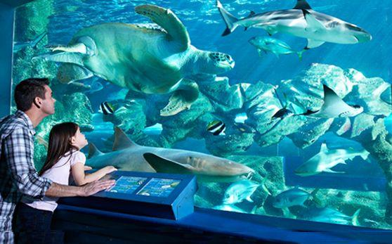Oceanarium Bournemouth Multiple Pinterest