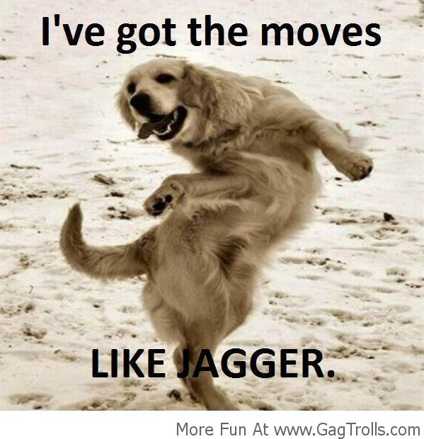 #Dog Dancing Like #Jagger. Haha this is so me!