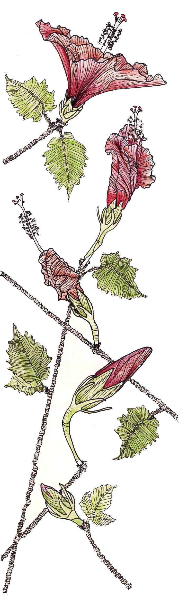 Line Art Hibiscus : Line drawing flowers hibiscus drawings pinterest