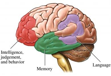 the causes symptoms and diagnosis of cerebrovascular disease The symptoms of cerebrovascular disease will depend on the location of the patient's hemorrhage, thrombus or embolism, as well as the extent to which the cerebral tissue has been affected.