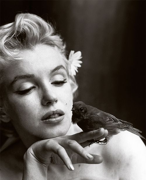 February 22, 1956 | Marilyn Monroe | bird | tweet | pet | starlet | beautiful | hollywood | iconic | feathers | black & white | pout | gentle | nature