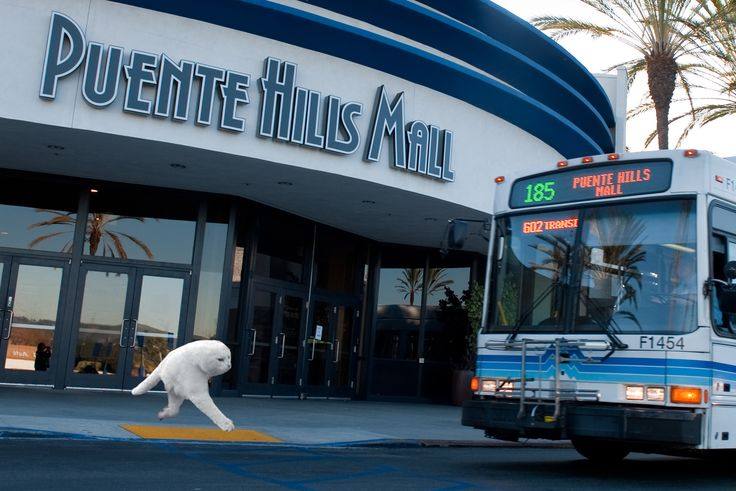 The elusive half cat spotted near foothill transit halfcat funny