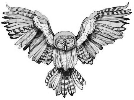 Barn Line Drawing Barn Owl Line Drawing Barn