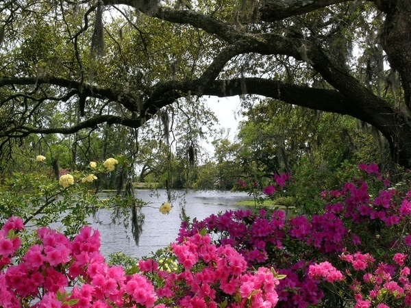 Airlie Gardens Nc It 39 S A Southern Thing Pinterest