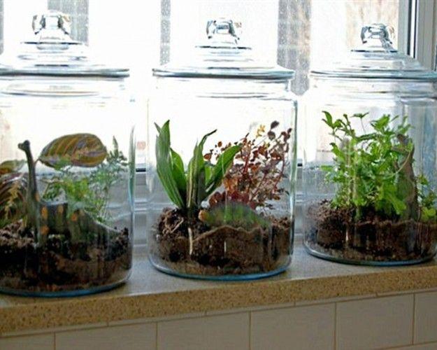 indoor gradening terrariums