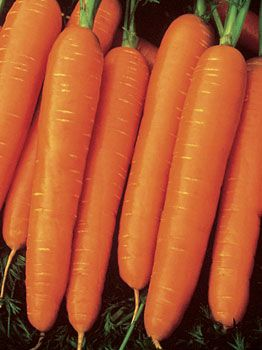 french heirloom carrot seeds