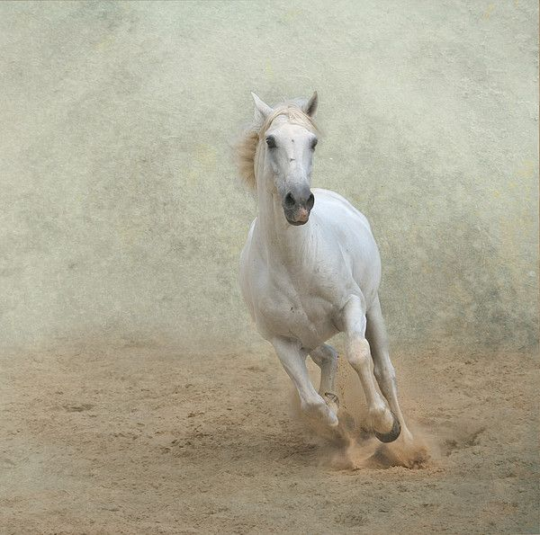Galloping white horse - photo#20