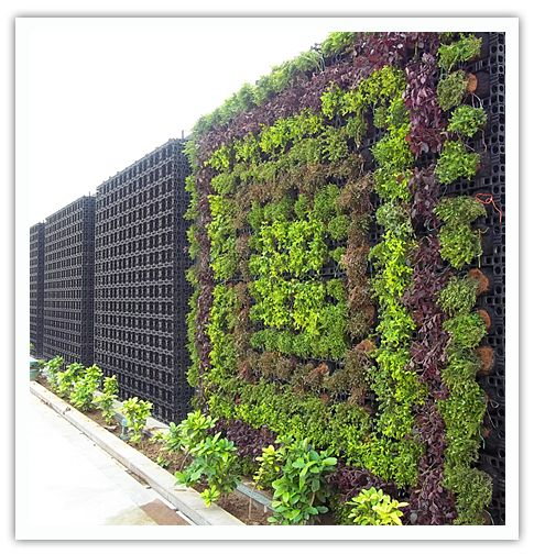 Living wall system outdoors pinterest for Living wall systems