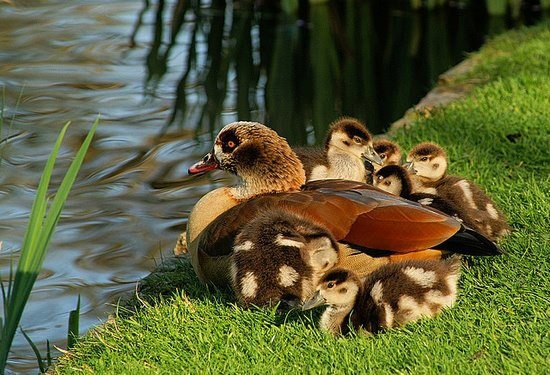 Família reunida...