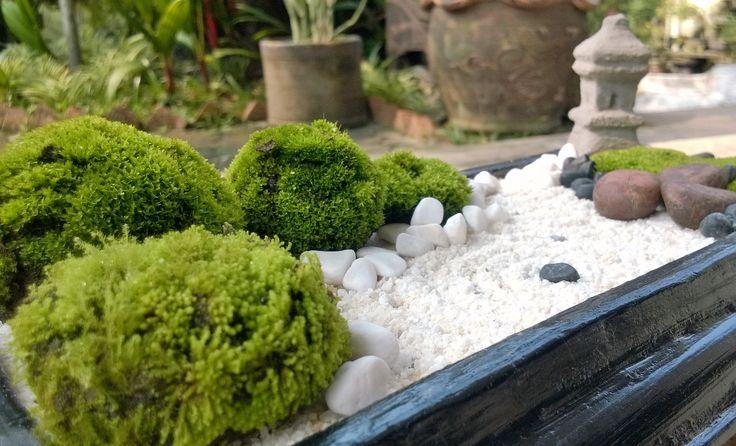 White sand mini zen garden diy mini zen garden pinterest for Miniature japanese garden