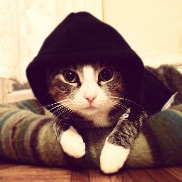 Wall-E: hood cat.