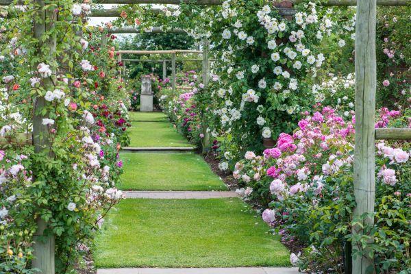 the long garden at david austin roses rose rose rose. Black Bedroom Furniture Sets. Home Design Ideas