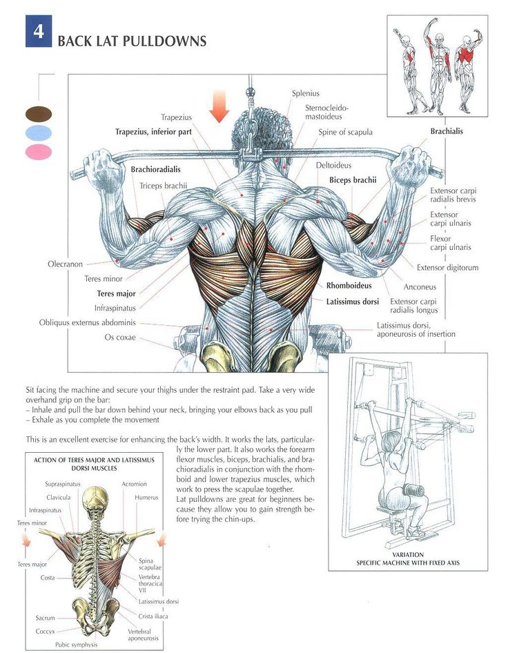 Colorful Strength Training Anatomy Workout Download Model - Human ...