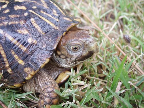 How To Care For A Turtle : How to Care for Your Box Turtle -- via wikiHow.com