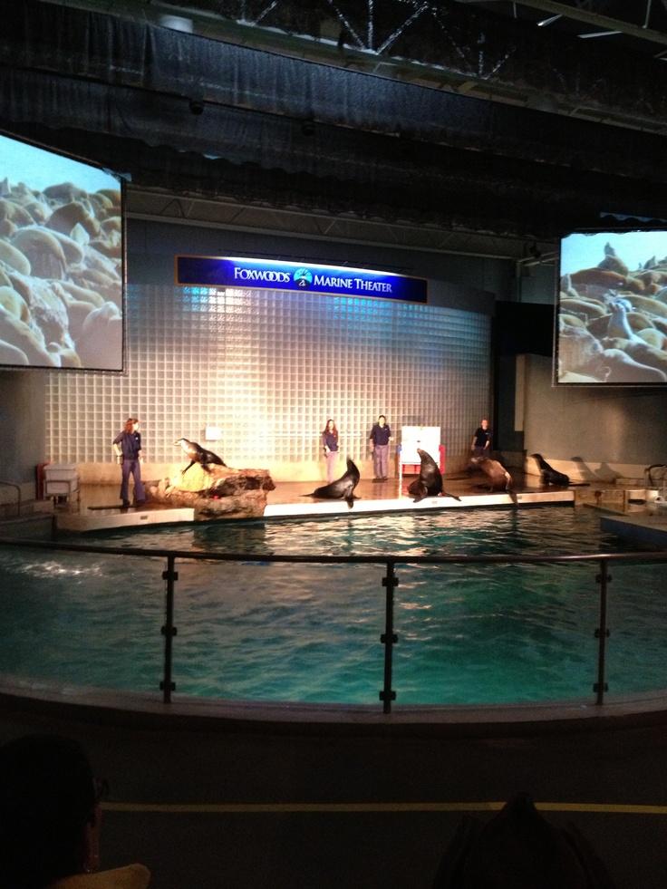 Mystic Aquarium Inside Mystic Aquarium Pinterest