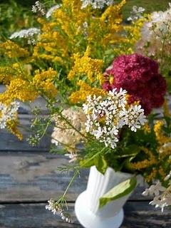 cilantro, goldenrod and sedum.
