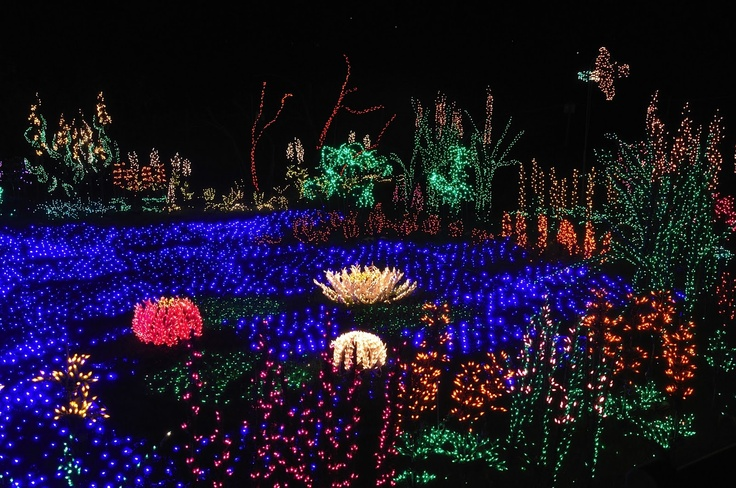 Bellevue Botanical Garden D 39 Lights Fave Places In