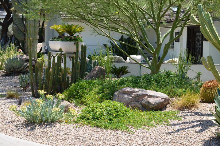 Pin by carla o 39 neill on for the home garden pinterest for Best plants for desert landscape